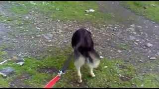 police blida avec cilop mon chien renifleur de drogue 3 .mp4
