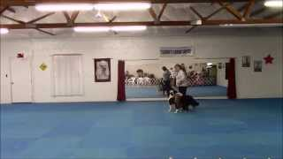 Gyspy & Prim Canine Freestyle Brace Training