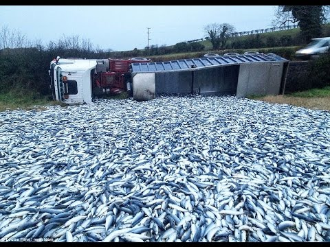 truck-fish-accident,-have-a-lot-of-fish-on-road-in-cambodia--cambodia-fishing