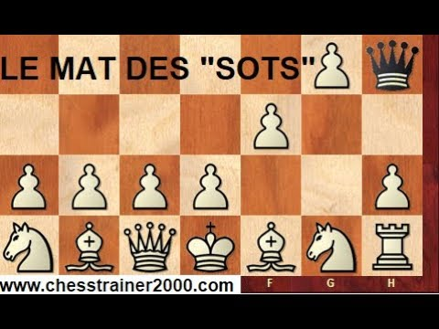 """Le Mat des """"Sots"""" (échecs)"""