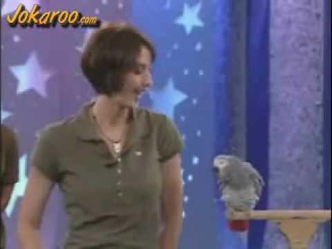 The Smartest Parrot