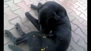 Пёс и Семки