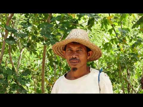 Bali & Lombok (4K)