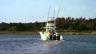42 Yellowfin random running video