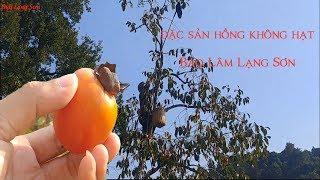 ĐẶC SẢN HỒNG KHÔNG HẠT BẢO LÂM lạng sơn ăn một lần nhỡ mãi I Thai Lạng Sơn