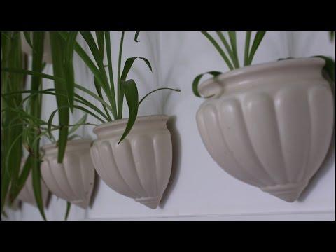 Классификатор Все о комнатных растениях на flowerswebinfo