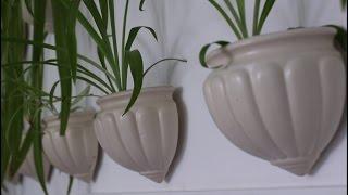 видео Комнатные растения в дизайне интерьеров
