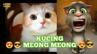 Lagu Kucing Meong Meong :: Tom Bernyanyi