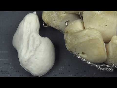 Scaphoid Anatomy and Osteology