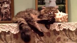 Кот Пташек шевелится во сне