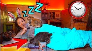 Ночь в доме у Кроликов 24 часа Челлендж Попробуй Уснуть | Elli Di Pets