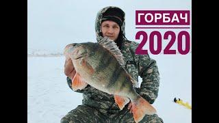Вот это кабан Трофейный окунь Зимняя рыбалка 2020