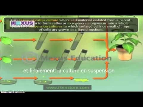 La culture in vitro