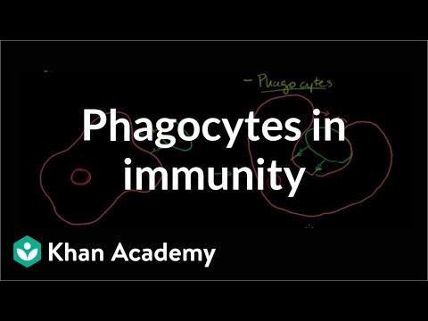 Role of phagocytes in innate or nonspecific immunity | NCLEX-RN | Khan Academy