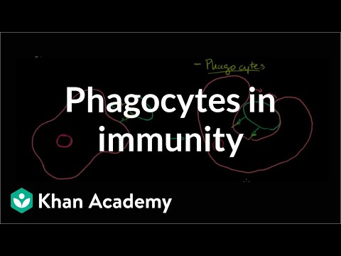 Role of phagocytes in innate or nonspecific immunity  NCLEXRN  Khan Academy