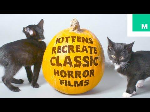 Adorable Kittens Recreate Classic Horror Films