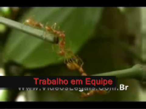 Trabalho Em Equipe Exemplo Das Formigas