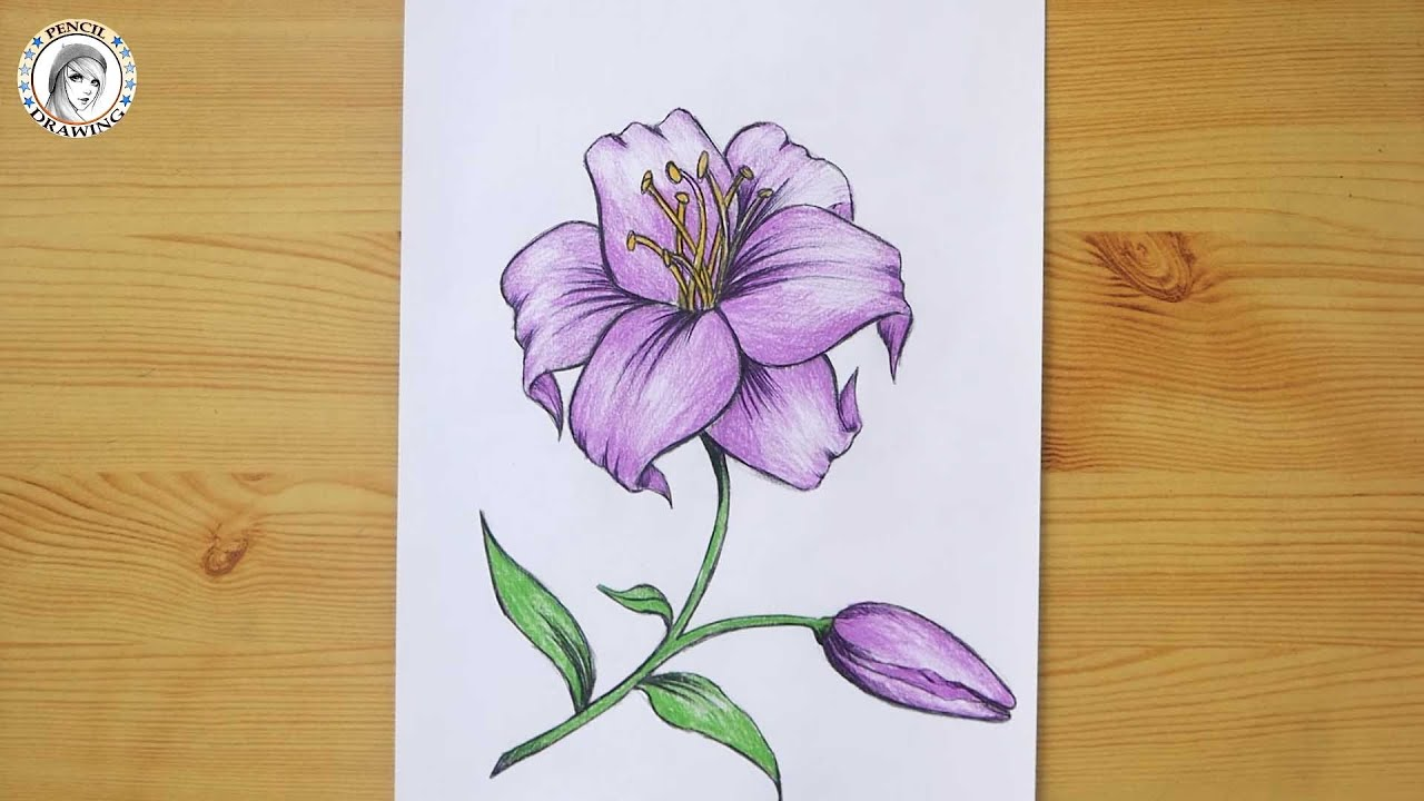Pin By Hd Drawing Academy On Academic Drawing Drawing For Beginners Drawings Flowers