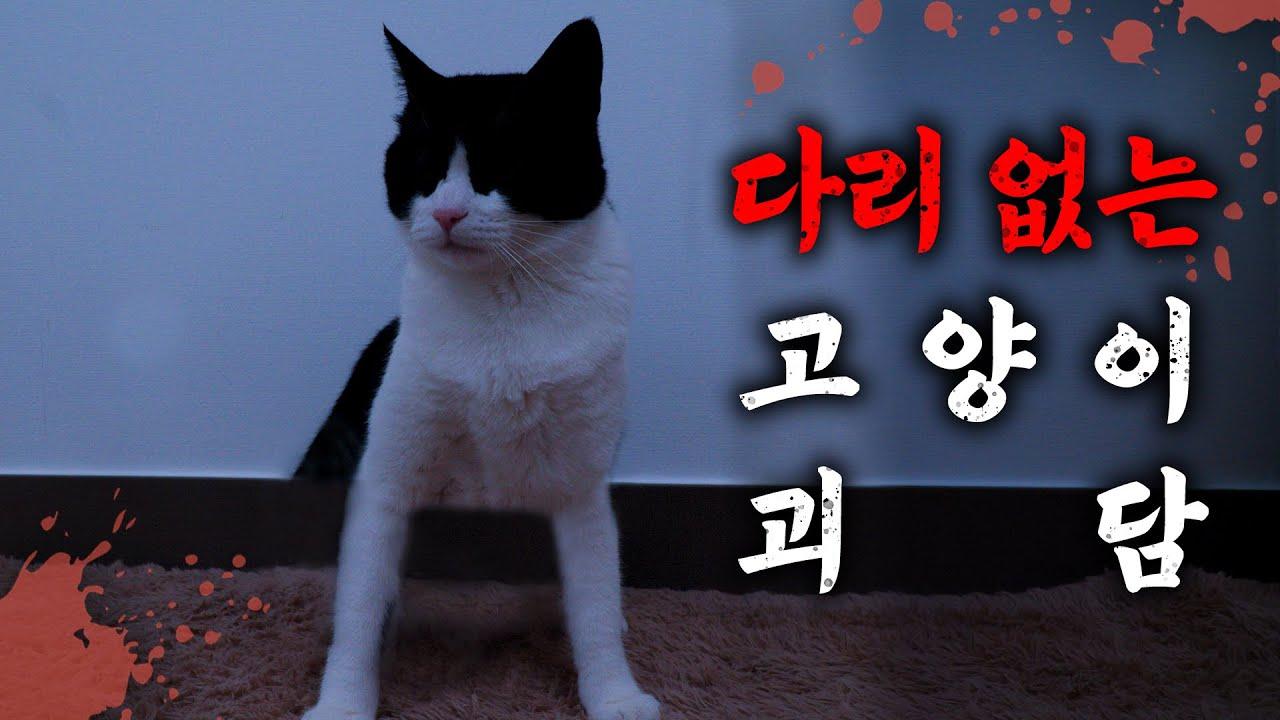 학교에 다리없는 고양이가 있어요.. 【납량특집 Ep.05】 | 고양이산책