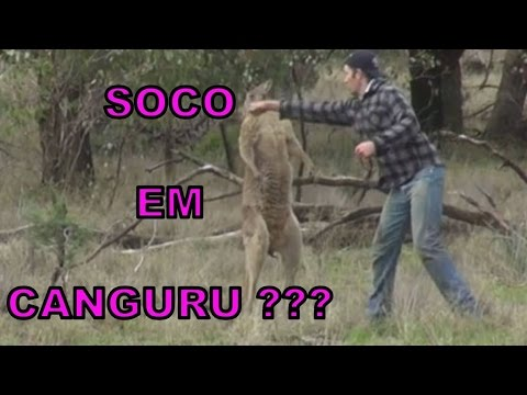 Homem lutando contra canguru 1