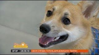 Украинка создала детский сад и гостиницу для собак