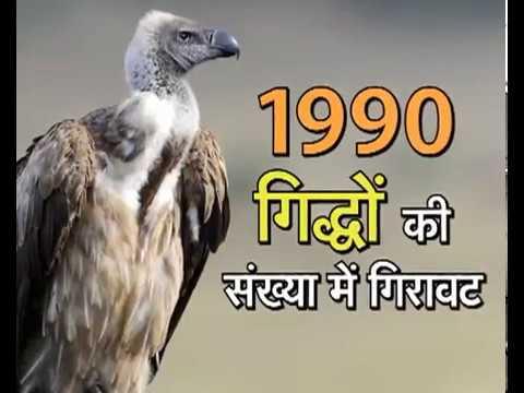 प्रकृति की ओर | Prakriti Ki Ore (Vulture)