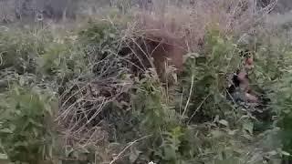 Garo Funny video