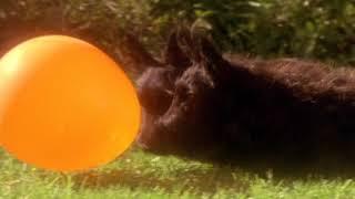Angus and the Ducks (Trailer) thumbnail