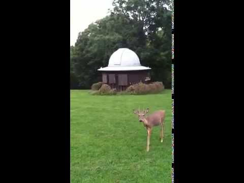 Deers and Saturn! !)@SPEIDEL# Observatory on' the Planet Oglebay Park| Peggy Connors. ` of Aurora