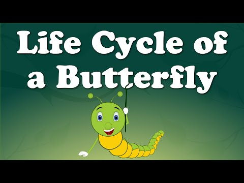 Life Cycle of a Butterfly | #aumsum #kids #science