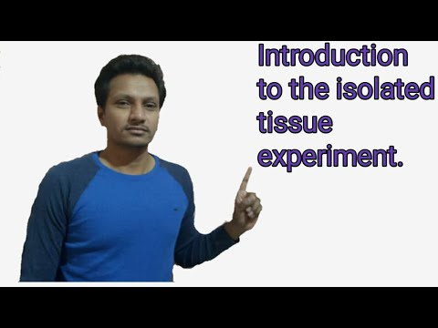 Introduction To Isolated Tissue Experiment Setup In Pharmacology