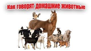 Animal sounds|Как говорят домашние животные|Звуки животных|Учим животных|