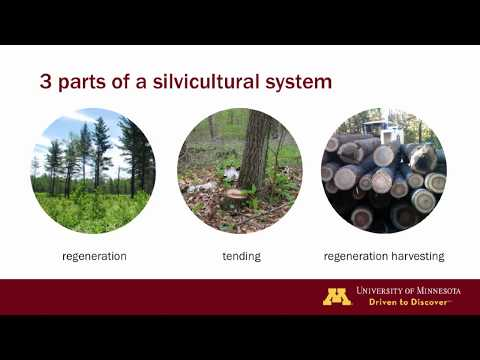 Silviculture terminology