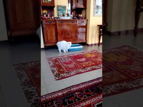 Cat escapes from his own poop