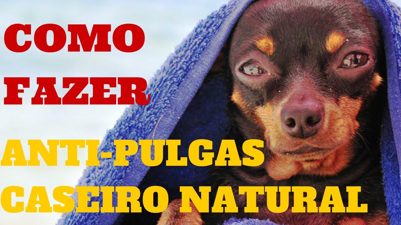 Como fazer anti pulgas caseiro natural funnydog tv - Como acabar con las pulgas en casa ...
