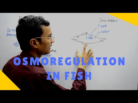 Osmoregulation In Fish