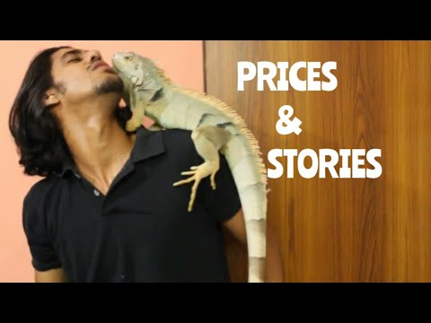 All my Pets' PRICES and STORIES | Wildly Indian