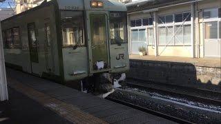 北長野〜長野 キハ110、しなの、キハユニ143 2017.2.19