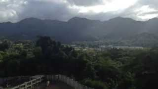 Adjuntas - Animals and View from Hacienda Maribó in Puerto Rico