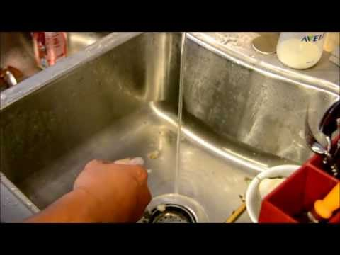 How to clean geoduck/horse clam