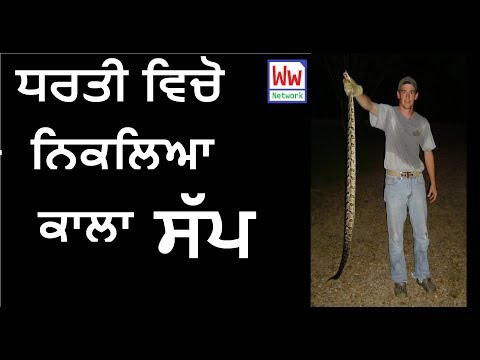 Black Snake Science Experiment 2017 by ww network