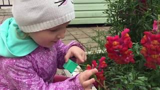 Гав-гав цветы собачки. Полина рассказывает о цветах. Детское видео. Умная дочка