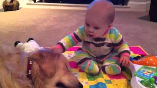 Baby Bonds With Her Golden Retriever