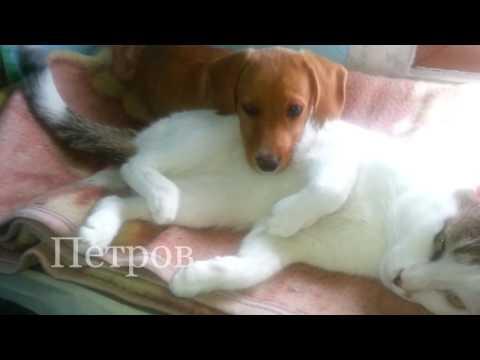 Куче и котка   Приятелство