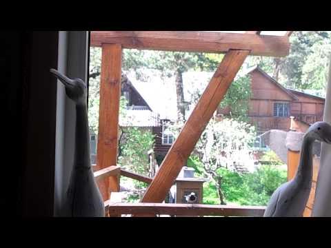 Хорошая примета: Птичка бьётся в окно