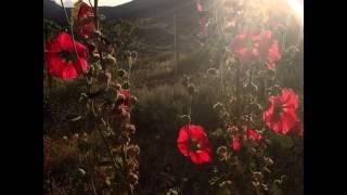 #цветы #цветок #сад #огород #флора #дача #лето #растение #природа #простаякрасота #flower #flowers