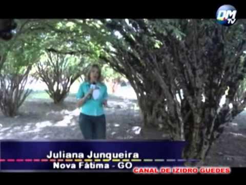f140ca6275f93 Fazenda Jaboticabal - GO - YouTube