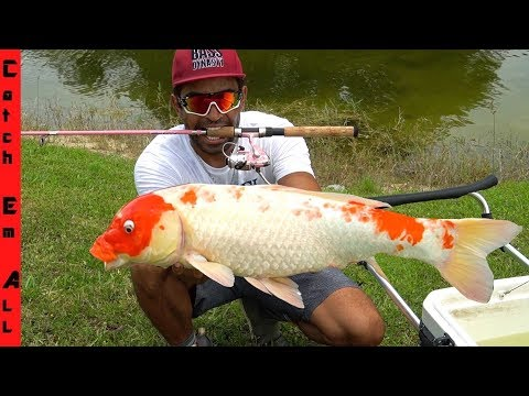 HOW To Catch KOI FISH!