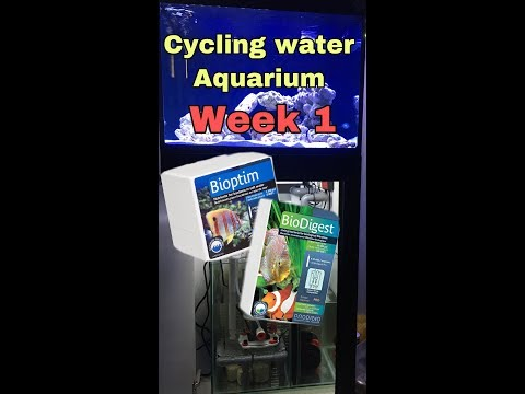 Saltwater Cycle New Tank