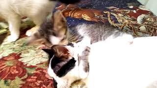 Добрых котят в добрые руки